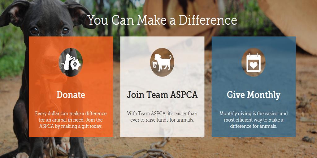 ASPCA Cavapoo Rescue